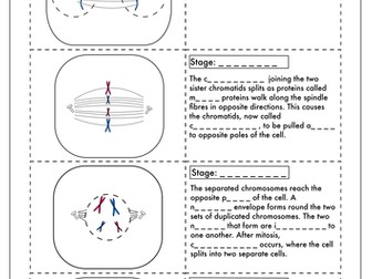 A Level Biology:  Mitosis Activity
