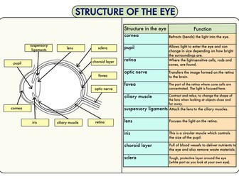 Colour Poster on the Structure of the Eye
