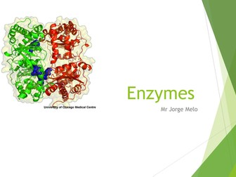 Enzymes AS Level