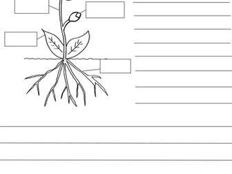 Ks1 differentiated parts of a plant worksheets by misspkaur ks1 differentiated parts of a plant worksheets by misspkaur teaching resources tes ccuart Images