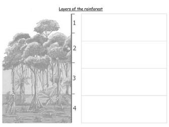 SEN Brazil and Rainforest - Layers of the Rainforest worksheet