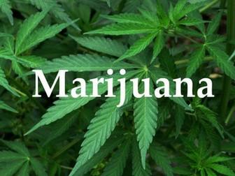 Cannabis: impacts on body/society