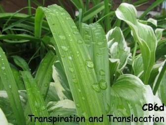 Edexcel CB6d Transpiration and Translocation