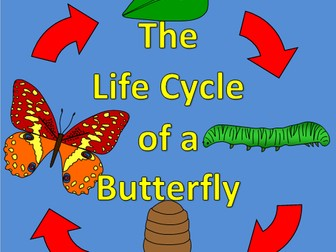 The Life Cycle of a Butterfly- Hungry Caterpillar, Spring