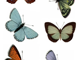 Butterflies for Drawing and Painting (Insects)