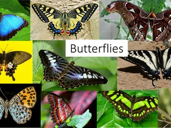 Butterfly Photo Bank / Library of Images