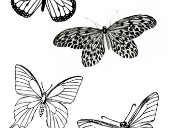 Butterfly Resource Sheet for Drawing and Painting (Insects)