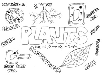 Plants poster to colour in - start/end term/ SEN science Christmas lesson