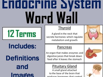 Endocrine System Word Wall Cards