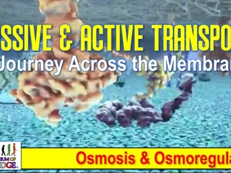 Passive Transport, Active Transport, Osmosis, and Osmoregulation 3D Animated PowerPoint