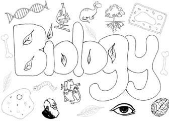 Biology science poster colouring Christmas activity end of term