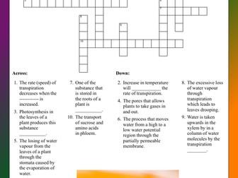 Plant transport - Crossword assessment