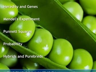 Medelian Genetics Guided Note Packet