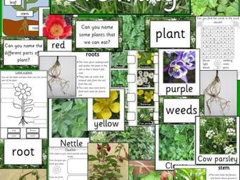 Growing plants topic pack- Spring, Gardening, Growth