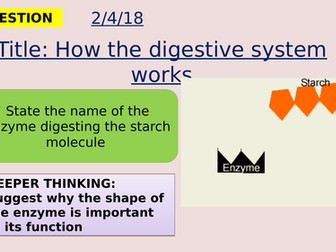 AQA new specification-How the digestive system works-B3.6