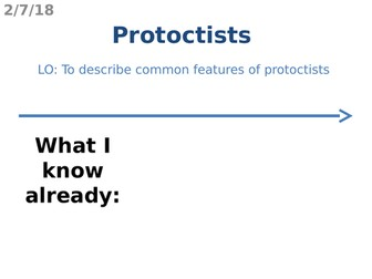 Protoctists