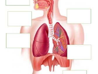 AQA GCSE PE (9-1) 3.1.1.2 The structure and function of the cardio-respiratory system - Revision