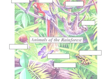 Rainforest Animals - 8 Resources