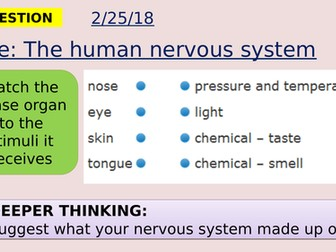AQA new specification-The structure and function of the human nervous system-B10.2