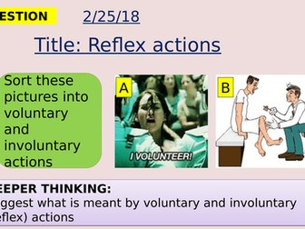 AQA new specification-Reflex actions-B10.3