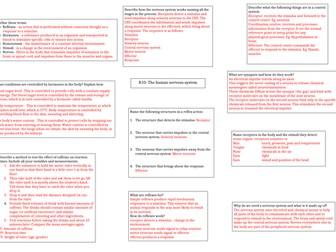 AQA Nervous system answer sheet