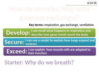 7Ca Muscles and breathing (Exploring Science)