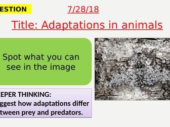 AQA new specification-Adaptation in animals-B15.7