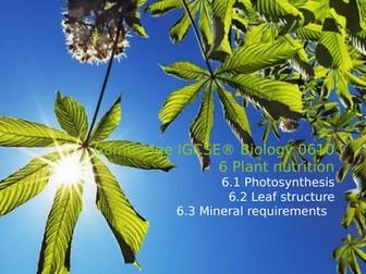 Cambridge IGCSE® Biology 0610, 6 Plant nutrition