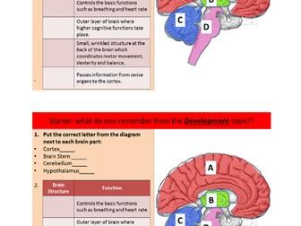 BRAIN AND NEUROPSYCHOLOGY TOPIC - AQA GCSE PSYCHOLOGY (9-1 ...