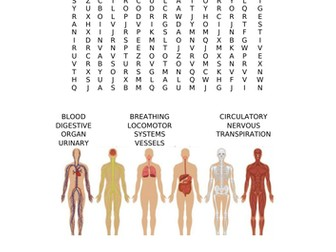 Organ Systems Word Search
