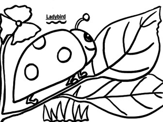 Ladybird Colouring Sheet