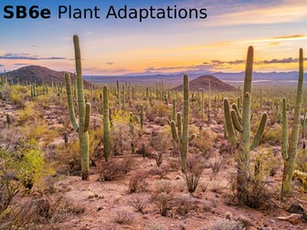 Edexcel SB6e Plant Adaptations