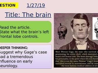 AQA new specification-The brain-B10.4