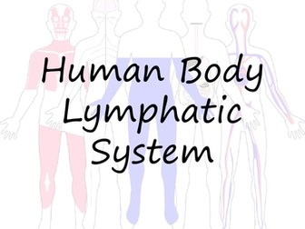 Human Body: Lymphatic System Crossword and Word Search