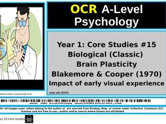 OCR A-Level Psychology: Core Studies #15 Biological (Classic) Brain Plasticity Blakemore & Cooper