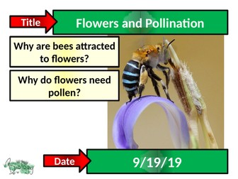 Flowers and Pollination - Activate