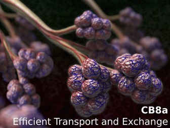Edexcel CB8a Efficient Transport and Exchange