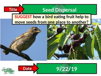 Seed Dispersal - Activate