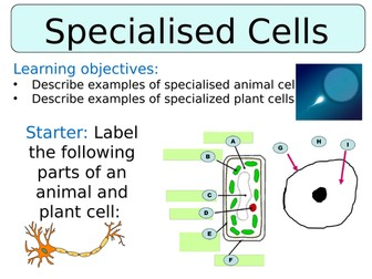 KS3 ~ Year 7 ~ Specialised Cells