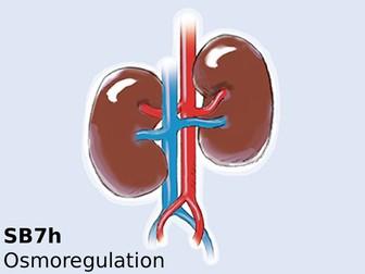 Edexcel SB7h Osmoregulation