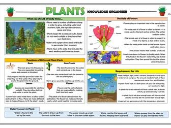 Year 3 Plants Knowledge Organiser!