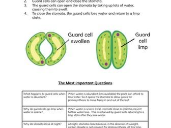 Guard Cells & Stomata Worksheet & Cheatsheet for GCSE