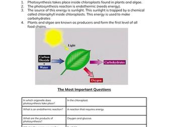 Photosynthesis Worksheet & Cheatsheet for GCSE