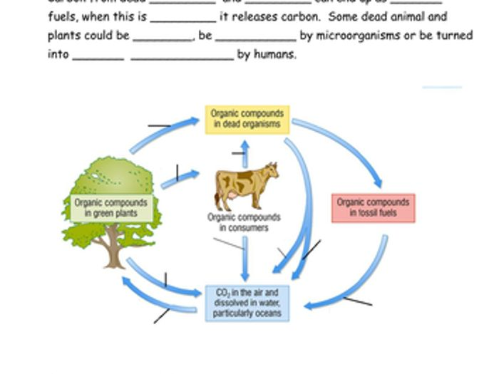 Carbon cycle diagram test questions printable diy enthusiasts carbon cycle by sian jones teaching resources tes rh tes com co2 cycle carbon cycle diagram ccuart Choice Image