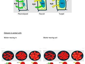 Diffusion and Osmosis unit