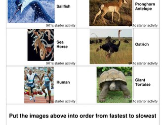 Activities and Worksheets About Calculating Speed