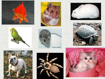 Pets in French