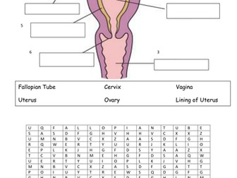 Printables Female Reproductive System Worksheet female reproductive system by vinnie254 teaching resources tes system