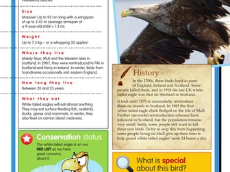 White tailed eagle activies and factsheet