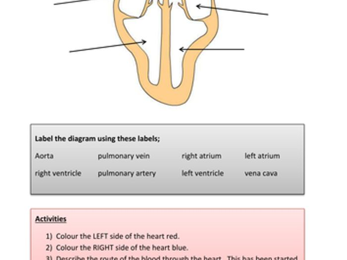 Diagram of heart easy data wiring diagrams simple heart diagram to label by kpendlebury teaching resources tes rh tes com diagram of heart and arteries diagram of heart flow ccuart Image collections